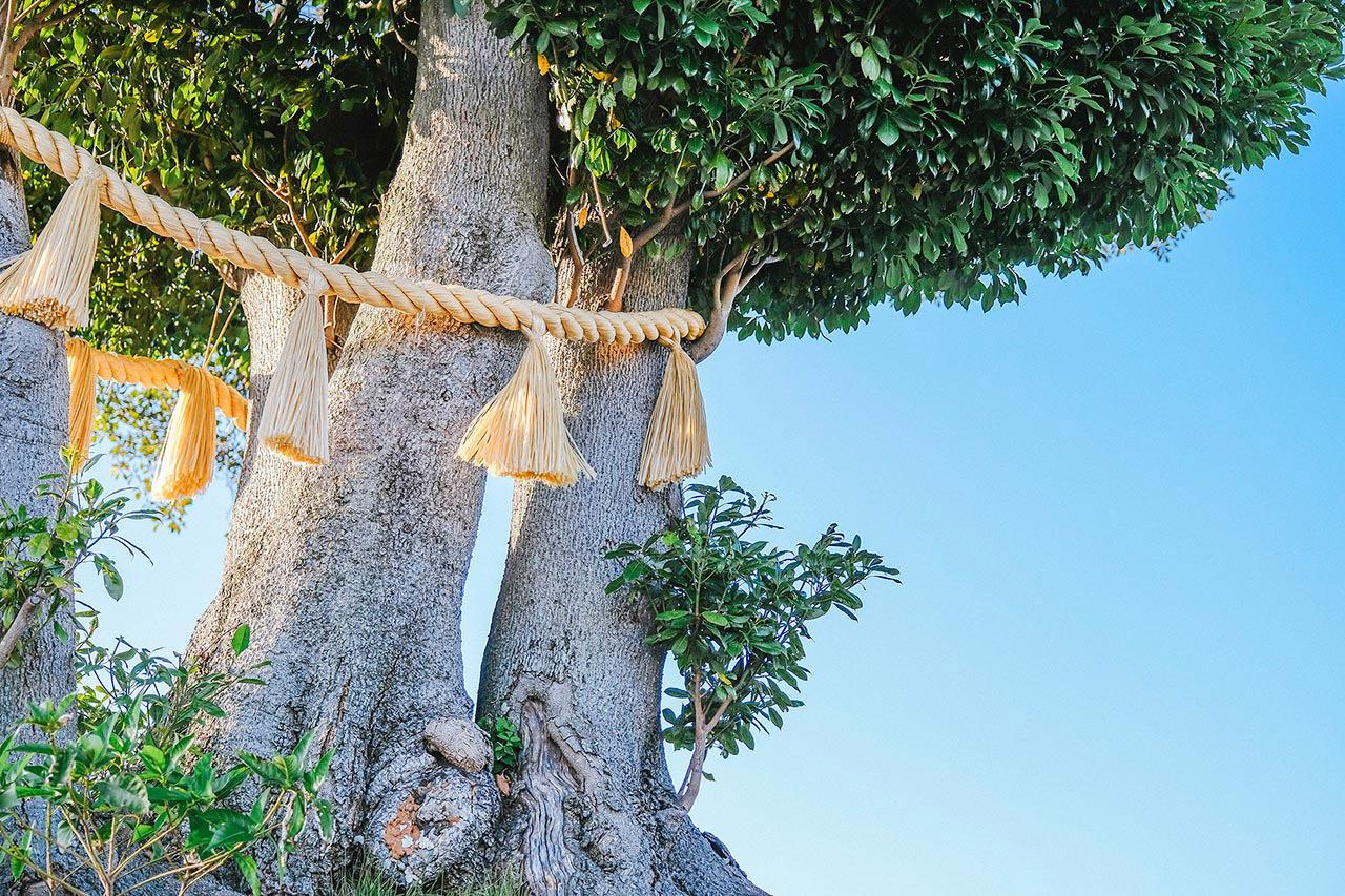霊苑守護 温品の御神木